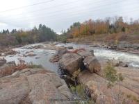 Powerline III Rapids Moose 10-18-2015_00007.JPG